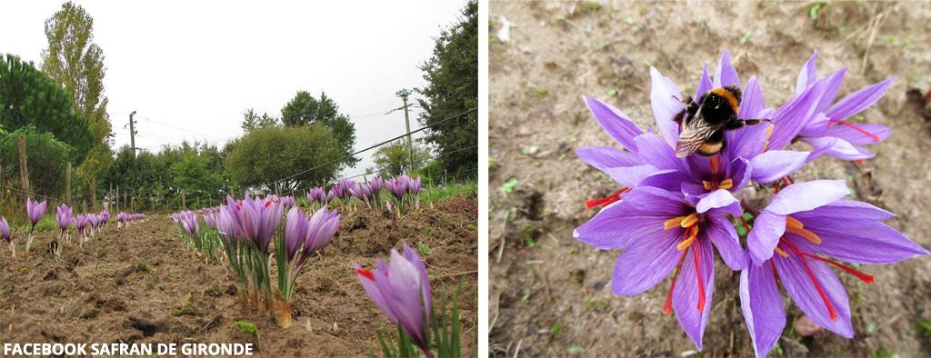 Les fleurs éclosent en octobre