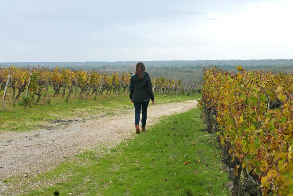 Route des vins de sautene