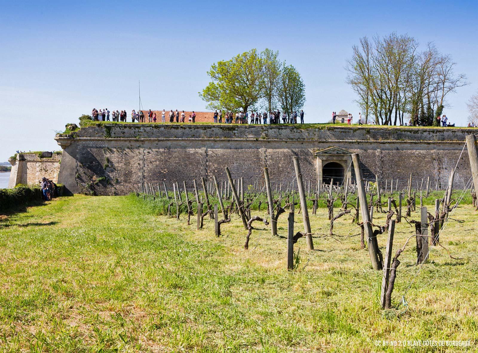 Vigne Citadelle de Blaye