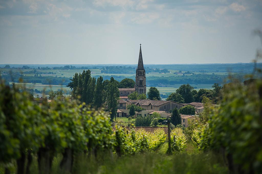 Le vignoble à Sainte Croix du Mont - Guide Bordeaux Gironde